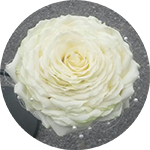 kukkivat.fi-morsiussidonta-circleicon-150x150